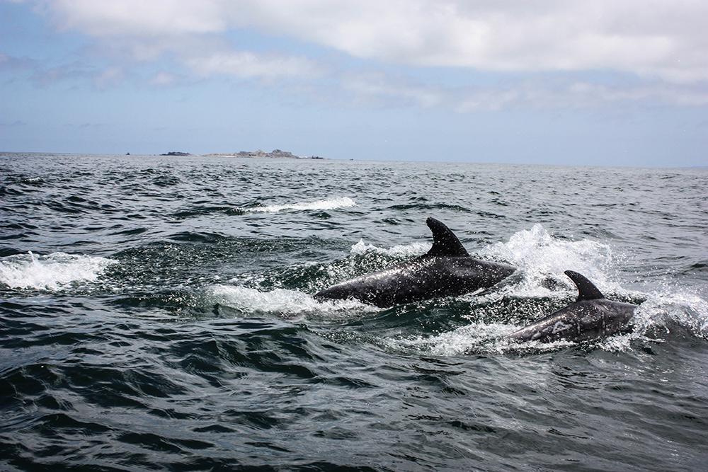 isla-damas-chile-southamerica-modeblog-travelblog-19-3k