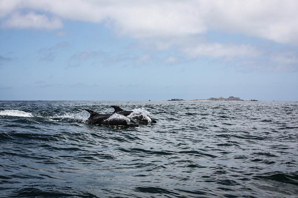isla-damas-chile-southamerica-modeblog-travelblog-19-4k